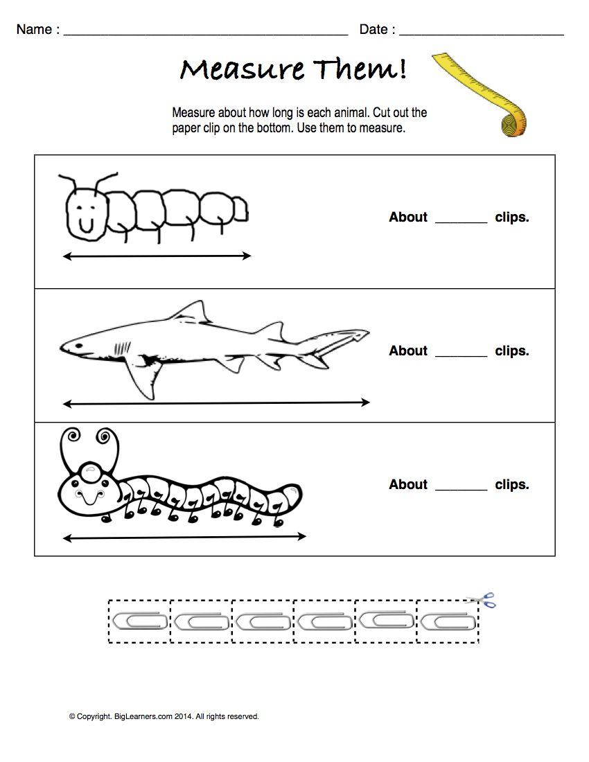Preview image for worksheet with title Measure Them!