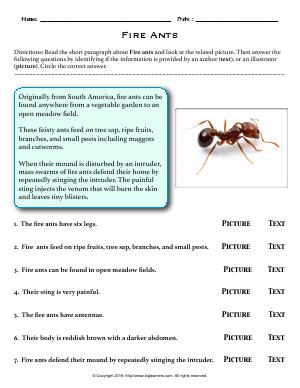 Preview image for worksheet with title Fire Ants