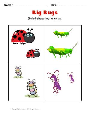 Preview image for worksheet with title Big Bugs